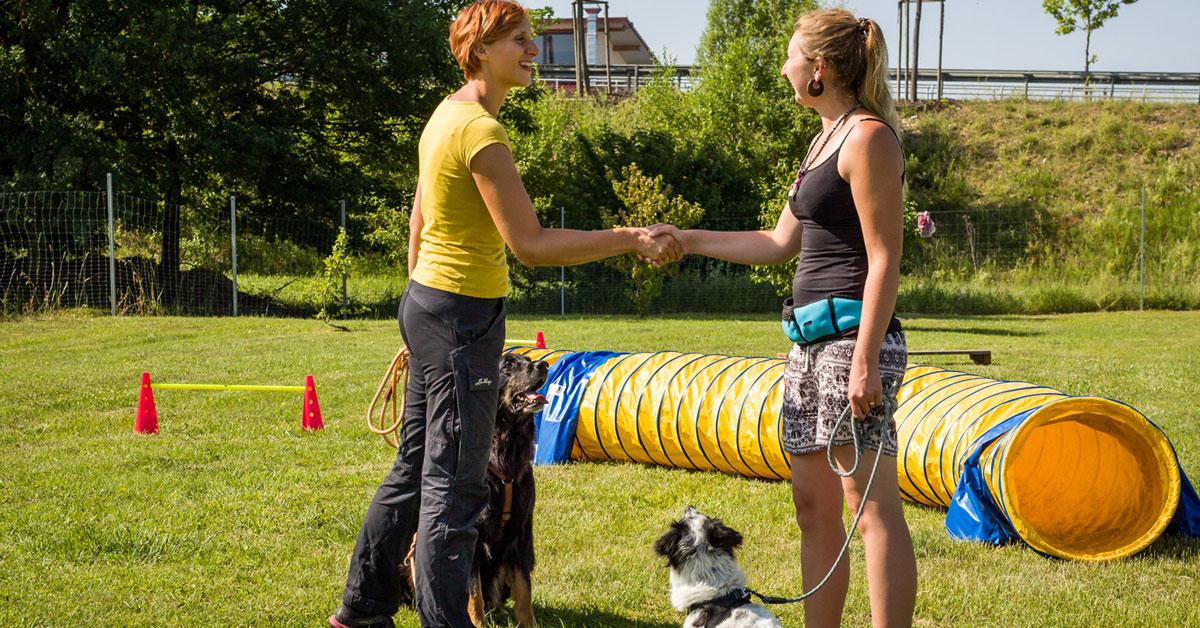 Social Video für Hundeschule Akademie Hund, Regensburg