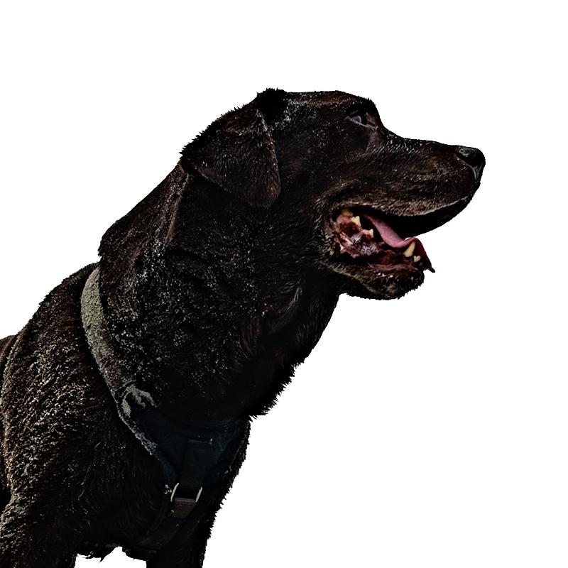 Bürohund Beno